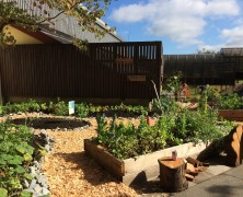 Collaborative Community Garden Enjoys Root in Kitsilano