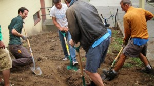 Digging up tree roots, Aug 19th, 2014