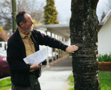 Kerrisdale Sakura Tree Walking Tour with Robin Clark